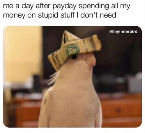 me a day after payday spending all my money on stupid stuff I don't need @myinnerbird bird birb wearing a hat made of a folded money bill