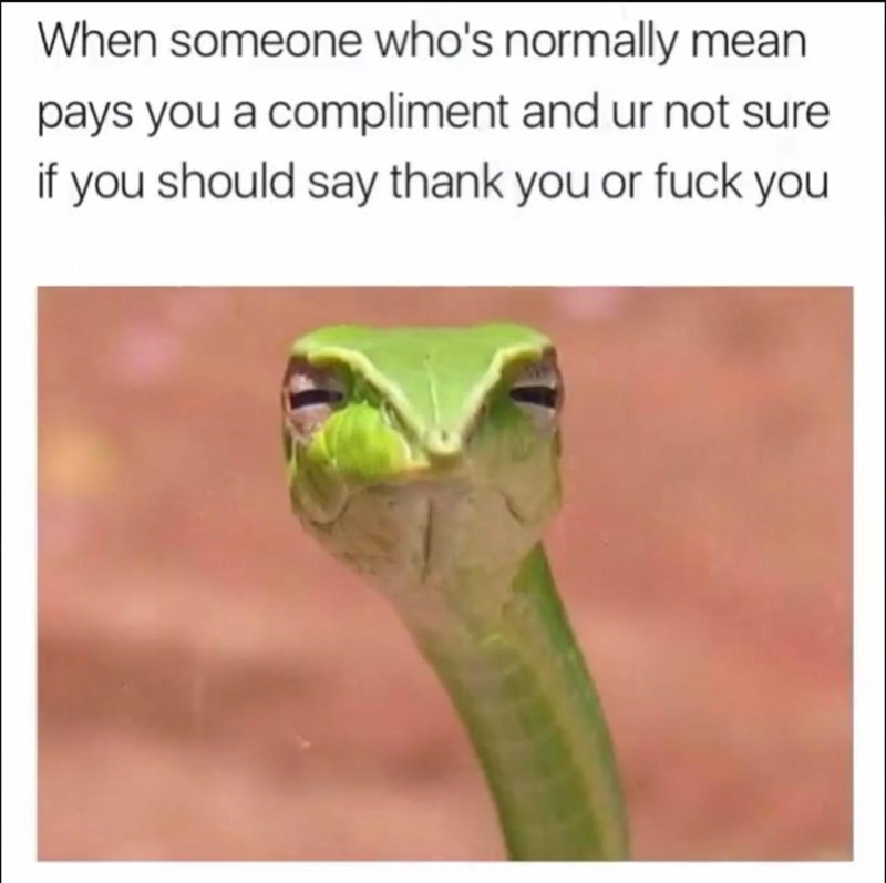 Smooth Greensnake - When someone who's normally mean pays you a compliment and ur not sure if you should say thank you or fuck you
