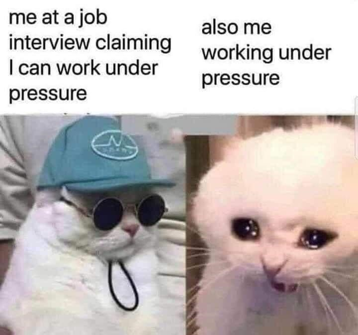Cat - me at a job interview claiming working under I can work under also me pressure pressure