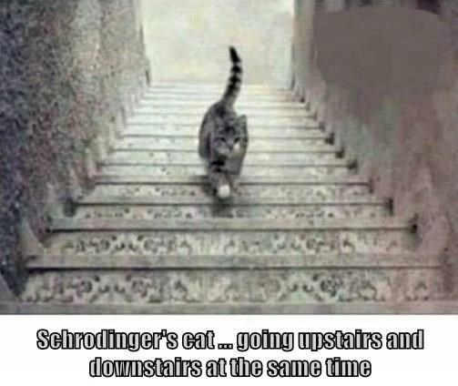 lolcats - Cat - Schrodinger's cat. going upstairs and downstairs at the same time