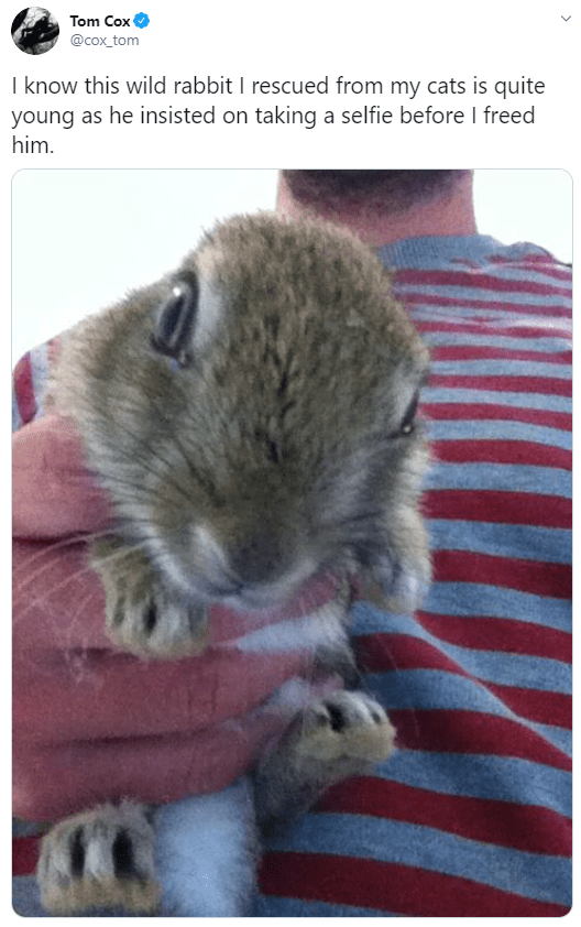 Mammal - Tom Cox @cox_tom I know this wild rabbit I rescued from my cats is quite young as he insisted on taking a selfie before I freed him.