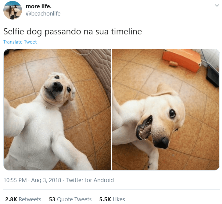 Dog breed - more life. @beachonlife Selfie dog passando na sua timeline Translate Tweet 10:55 PM · Aug 3, 2018 · Twitter for Android 2.8K Retweets 53 Quote Tweets 5.5K Likes