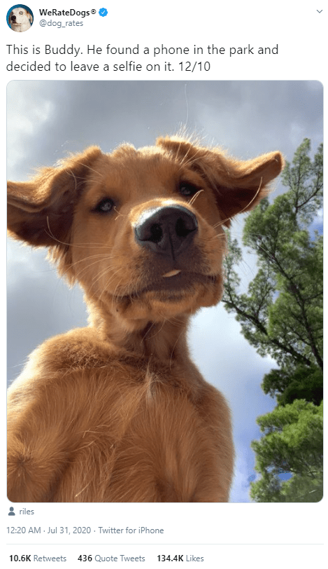 Dog breed - WeRateDogs® @dog_rates This is Buddy. He found a phone in the park and decided to leave a selfie on it. 12/10 riles 12:20 AM - Jul 31, 2020 - Twitter for iPhone 10.6K Retweets 436 Quote Tweets 134.4K Likes
