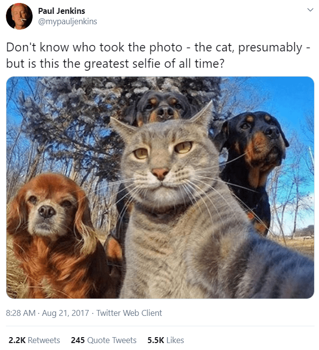 Canidae - Paul Jenkins @mypauljenkins Don't know who took the photo - the cat, presumably - but is this the greatest selfie of all time? 8:28 AM · Aug 21, 2017 · Twitter Web Client 2.2K Retweets 245 Quote Tweets 5.5K Likes