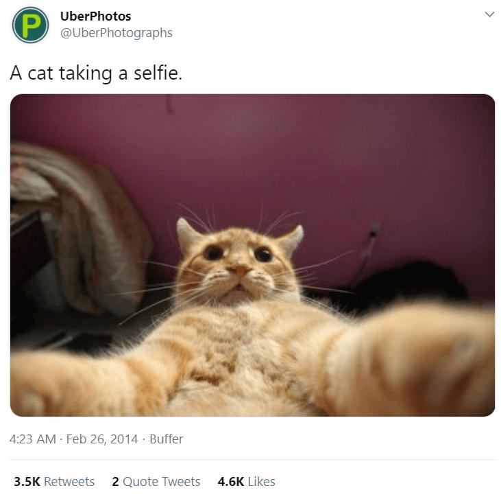 Cat - UberPhotos @UberPhotographs A cat taking a selfie. 4:23 AM - Feb 26, 2014 · Buffer 3.5K Retweets 2 Quote Tweets 4.6K Likes
