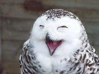 Owl - ww