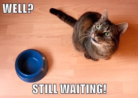 lolcats - Cat - WELL? STILL WAITING!