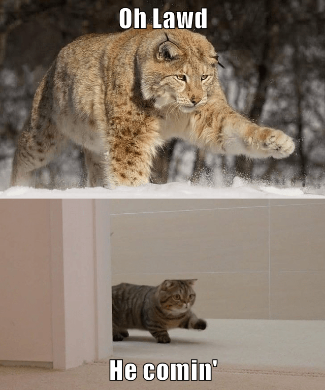 lolcats - Mammal - Oh Lawd He comin'