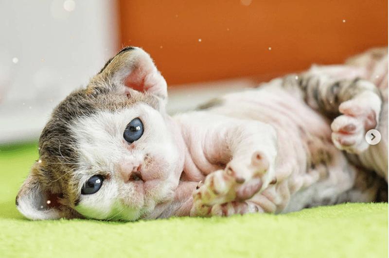 aww baby animals kitten cute cats cat photos Cats sphynx - 9551877