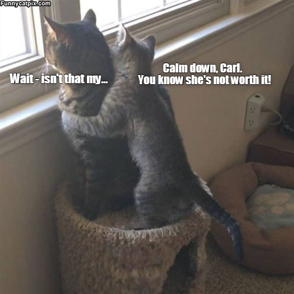 lolcats - Cat - Funnycatpix.com Wait- isn't that my. Calm down, Carl. You know she's not worth it!