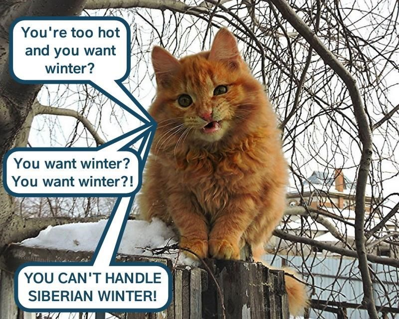 lolcats - Cat - You're too hot and you want winter? You want winter? You want winter?! YOU CAN'T HANDLE SIBERIAN WINTER!