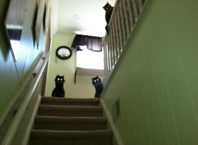 lolcats - Stairs