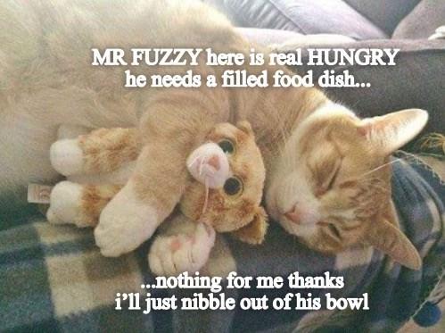 lolcats funny cats cat memes - 9552098560
