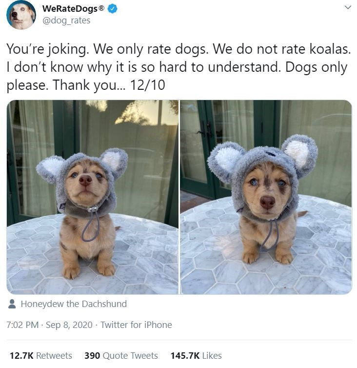 Dog - WeRateDogs ® @dog_rates You're joking. We only rate dogs. We do not rate koalas. I don't know why it is so hard to understand. Dogs only please. Thank you. 12/10 Honeydew the Dachshund 7:02 PM · Sep 8, 2020 · Twitter for iPhone 12.7K Retweets 390 Quote Tweets 145.7K Likes >