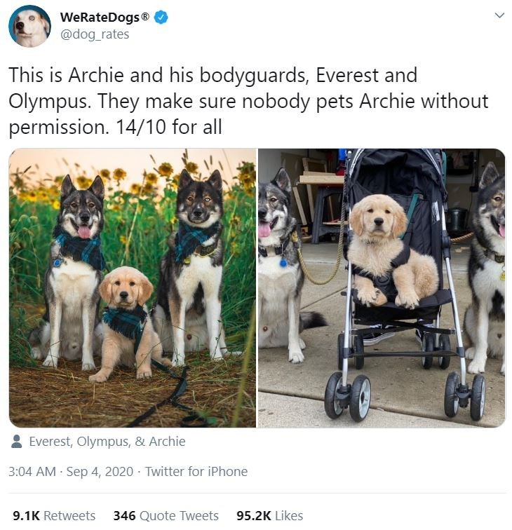 Dog - WeRateDogs® @dog_rates This is Archie and his bodyguards, Everest and Olympus. They make sure nobody pets Archie without permission. 14/10 for all 2 Everest, Olympus, & Archie 3:04 AM - Sep 4, 2020 · Twitter for iPhone 9.1K Retweets 346 Quote Tweets 95.2K Likes >