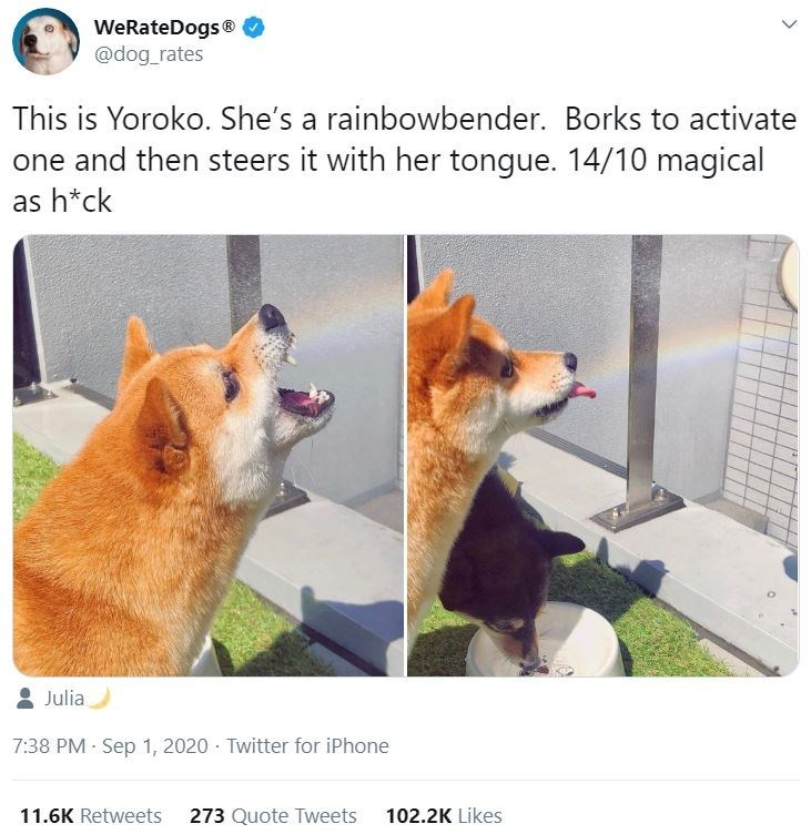 Canidae - WeRateDogs® @dog_rates This is Yoroko. She's a rainbowbender. Borks to activate one and then steers it with her tongue. 14/10 magical as h*ck Julia 7:38 PM Sep 1, 2020 - Twitter for iPhone 11.6K Retweets 273 Quote Tweets 102.2K Likes >