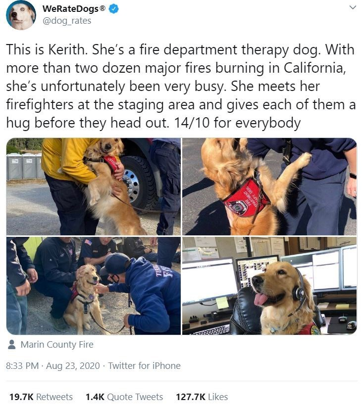 Dog - WeRateDogs® @dog_rates This is Kerith. She's a fire department therapy dog. With more than two dozen major fires burning in California, she's unfortunately been very busy. She meets her firefighters at the staging area and gives each of them a hug before they head out. 14/10 for everybody 8 Marin County Fire 8:33 PM Aug 23, 2020 · Twitter for iPhone 19.7K Retweets 1.4K Quote Tweets 127.7K Likes EPARTMENT >