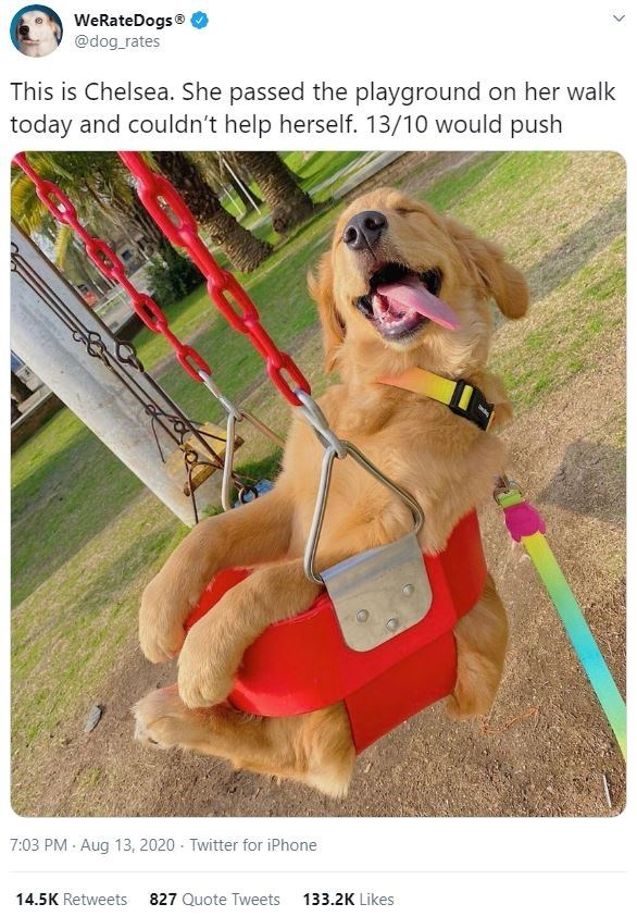 Dog - WeRateDogs® @dog_rates This is Chelsea. She passed the playground on her walk today and couldn't help herself. 13/10 would push 7:03 PM · Aug 13, 2020 · Twitter for iPhone 14.5K Retweets 827 Quote Tweets 133.2K Likes