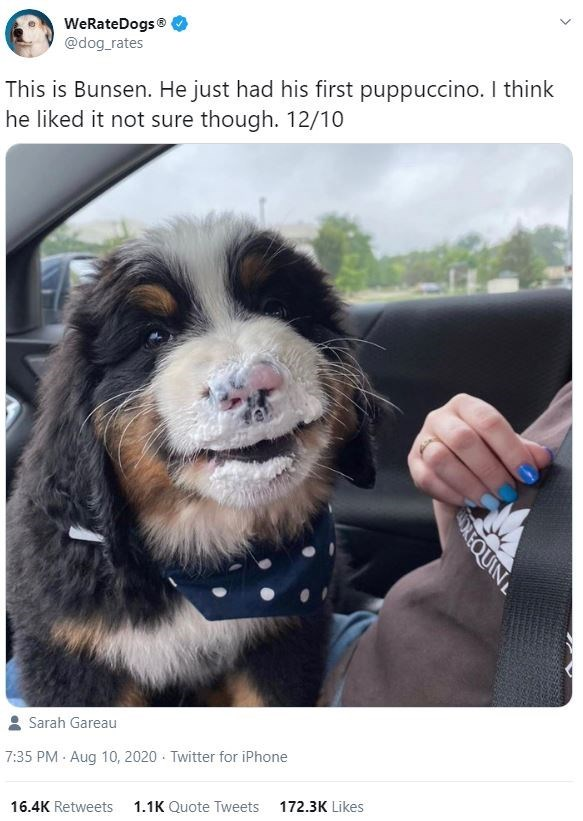 Dog - WeRateDogs @dog_rates This is Bunsen. He just had his first puppuccino. I think he liked it not sure though. 12/10 Sarah Gareau 7:35 PM Aug 10, 2020 · Twitter for iPhone 16.4K Retweets 1.1K Quote Tweets 172.3K Likes OREQUINL
