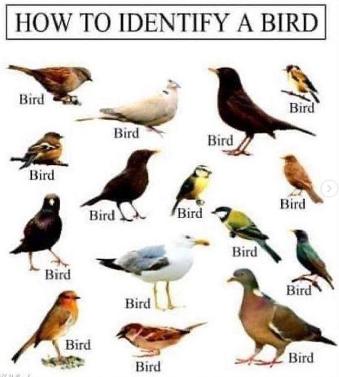 Bird - HOW TO IDENTIFY A BIRD Bird Bird Bird Bird Bird Bird Bird ГBird Bird Bird Bird Bird Bird Bird Bird