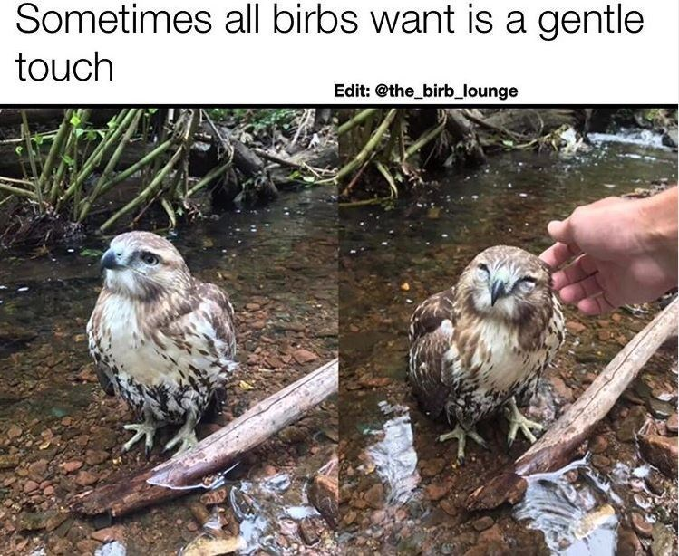 Bird - Sometimes all birbs want is a gentle touch Edit: @the_birb_lounge