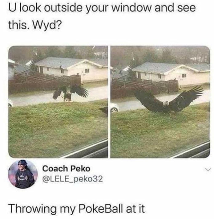 Vehicle - U look outside your window and see this. Wyd? Coach Peko @LELE_peko32 Throwing my PokeBall at it
