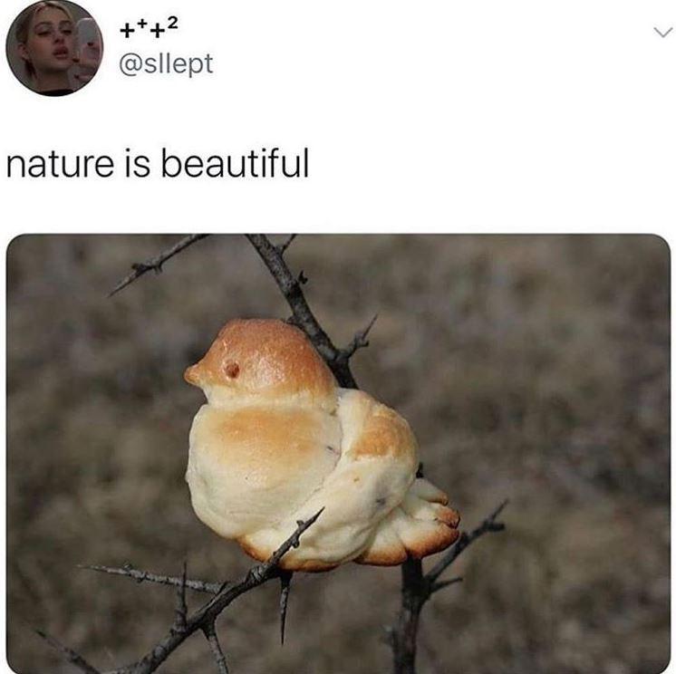 Bird - +++2 @sllept nature is beautiful