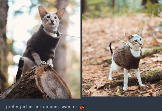 Vertebrate - pretty girl in her autumn sweater