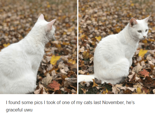 Cat - I found some pics I took of one of my cats last November, he's graceful uwu