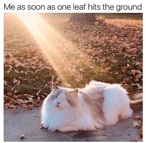 Sky - Me as soon as one leaf hits the ground