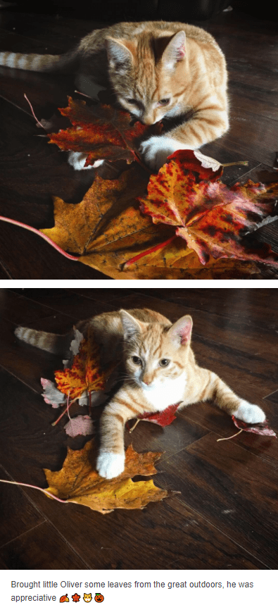 Cat - Brought little Oliver some leaves from the great outdoors, he was appreciative s 00