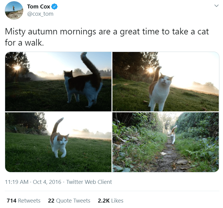 Adaptation - Tom Cox @cox_tom Misty autumn mornings are a great time to take a cat for a walk. 11:19 AM Oct 4, 2016 · Twitter Web Client 714 Retweets 22 Quote Tweets 2.2K Likes