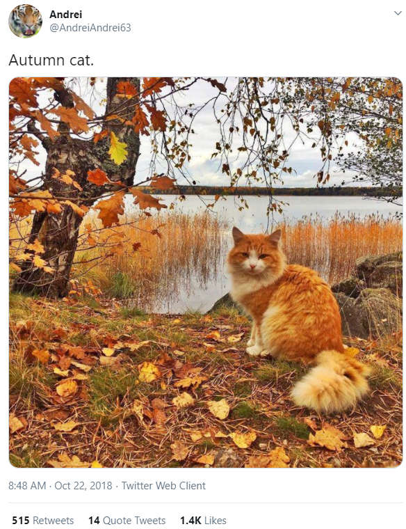 Cat - Andrei @AndreiAndrei63 Autumn cat. 8:48 AM - Oct 22, 2018 · Twitter Web Client 515 Retweets 14 Quote Tweets 1.4K Likes