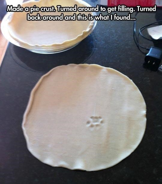 Dish - Madea pie crust. Turned around to get filling. Turned back around and this is what I found.