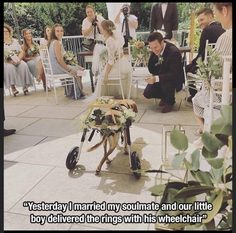"""Photograph - """"Yesterday Imarried my soulmate and our little boy delivered the rings with his wheelchair"""""""