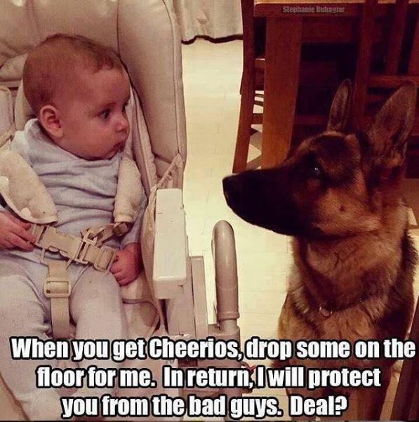 Dog - Stephanie Butagiar When you get Cheerios, drop some on the floor for me. Inreturn, Iwill protect you from the bad guys. Deal?