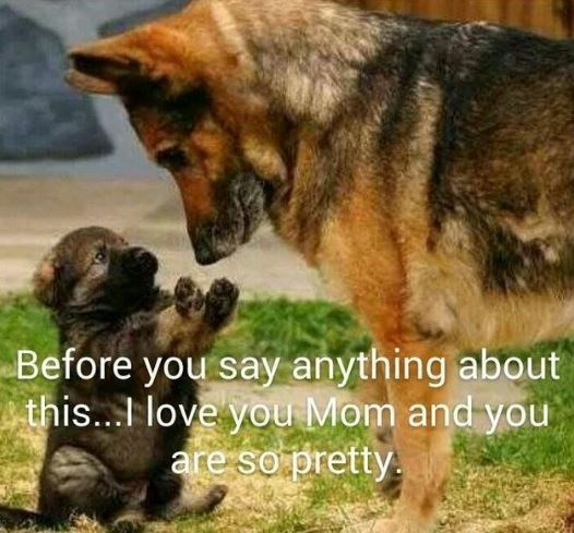Mammal - Before you say anything about this...I love you Mom and you are so pretty.