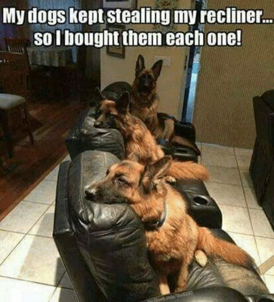 German shepherd dog - My dogs kept stealing my recliner. so I bought them each one!