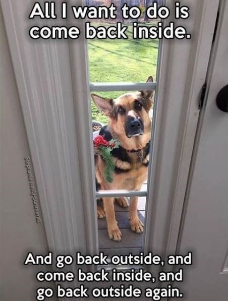 Dog - All I want to do is come back inside. And go back outside, and come back inside, and go back outside again. Stupune Rely-Samera