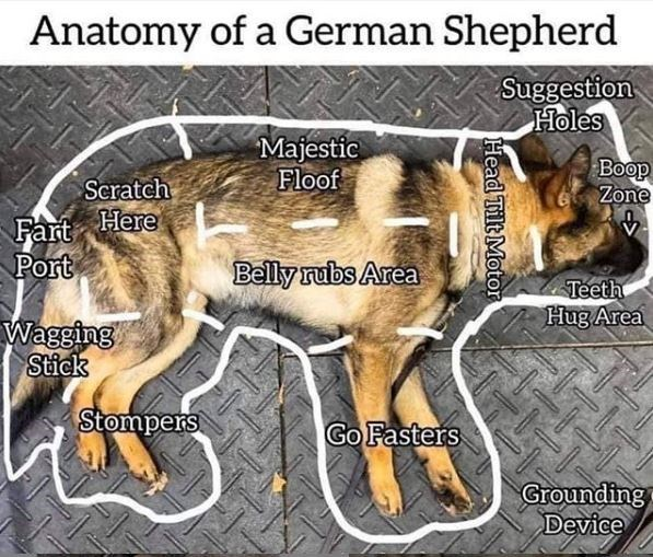 Dog - Anatomy of a German Shepherd Suggestion Holes Majestic Floof Boop Zone Scratch Here Fart Port Belly rubs Area Teeth Hug Area Wagging Stick Stompers Go Fasters Grounding Device Head Tilt Motor
