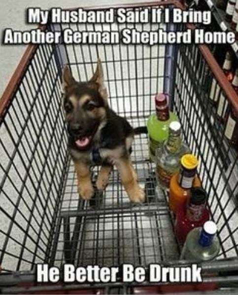 Vertebrate - My Husband Said If I Bring Another German Shepherd Home He Better Be Drunk