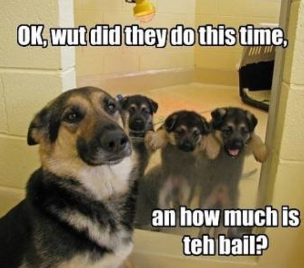 Mammal - OK, wut did they do this time, an how much is teh bail?