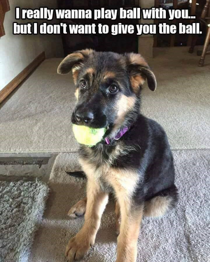 Dog - I really wanna play ball with you. but I don't want to give you the ball.