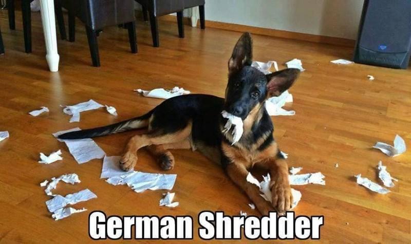 Mammal - ISRWAN Vean German Shredder