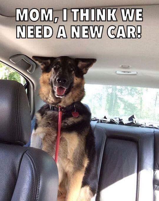 Dog - MOM, I THINK WE NEED A NEW CAR!