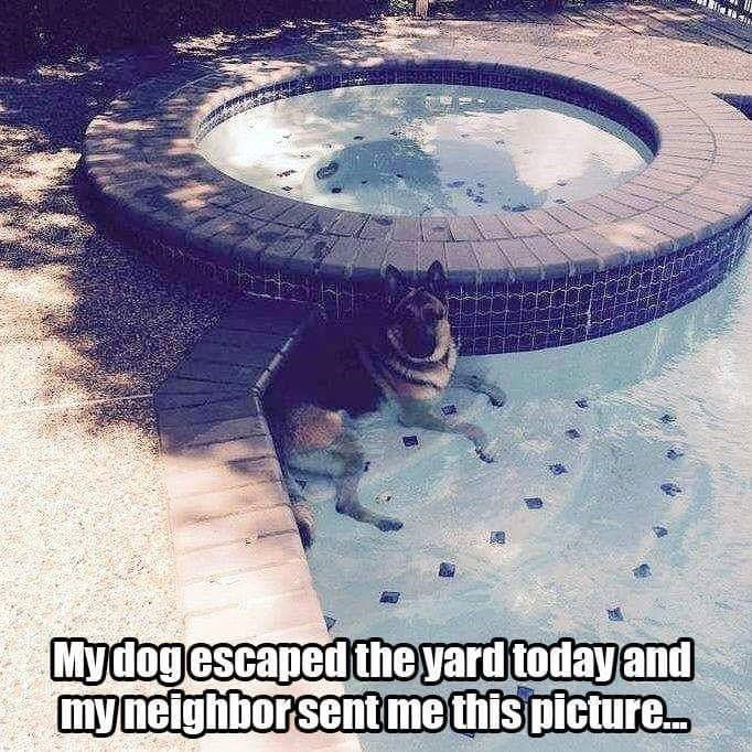 Water - Mydogescaped the yard today and my neighborsent me this picture.