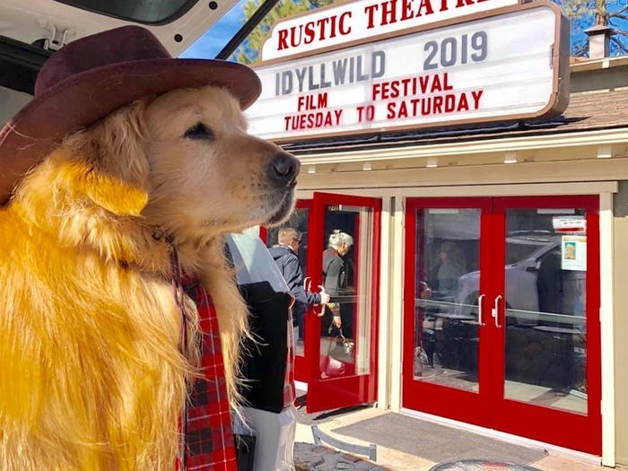 Dog - RUSTIC THE IDYLLWILD 2019 FESTIVAL FILM TUESDAY TO SATURDAY