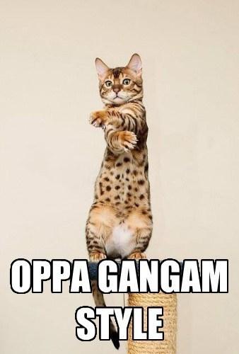 Cat - OPPA GANGAM STYLE