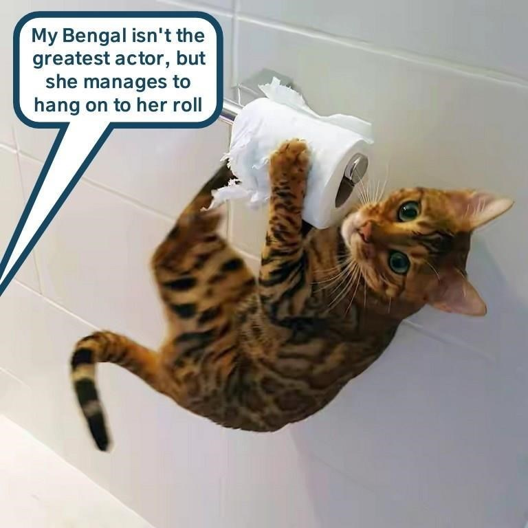 Cat - My Bengal isn't the greatest actor, but she manages to hang on to her roll