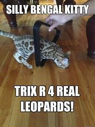 Laminate flooring - SILLY BENGAL KITTY TRIX R4 REAL LEOPARDS!